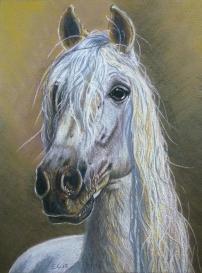 Cavallo, Pastelli, 21x29 cm